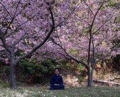 河津桜と名無き仙人